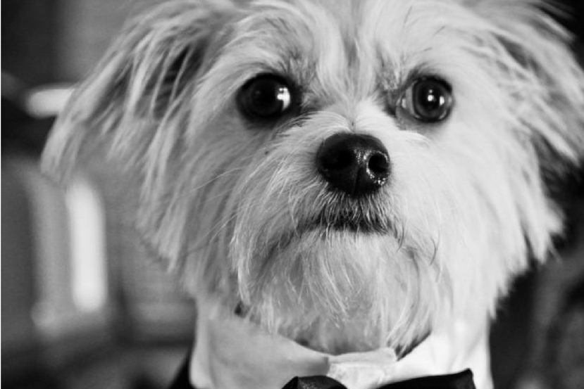 How to Incorporate Your Pet in Your Wedding
